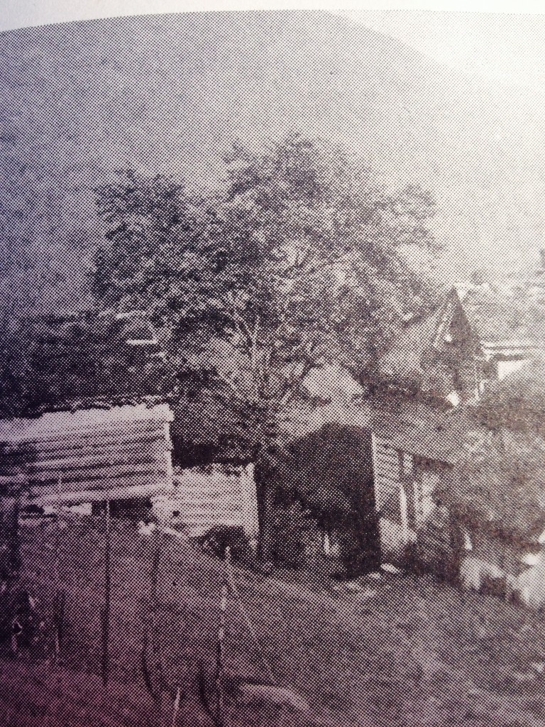 Det store tuntreet er ei Alm. Den vart planta i 1897. Fotograf: Olav Kvaale 1934. Bilete er tatt i frå Soga om Gloppen og Breim, band III, s. 242.